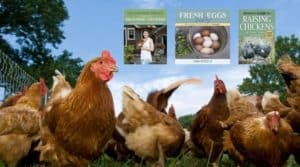 Best-Raising-Chickens-Book