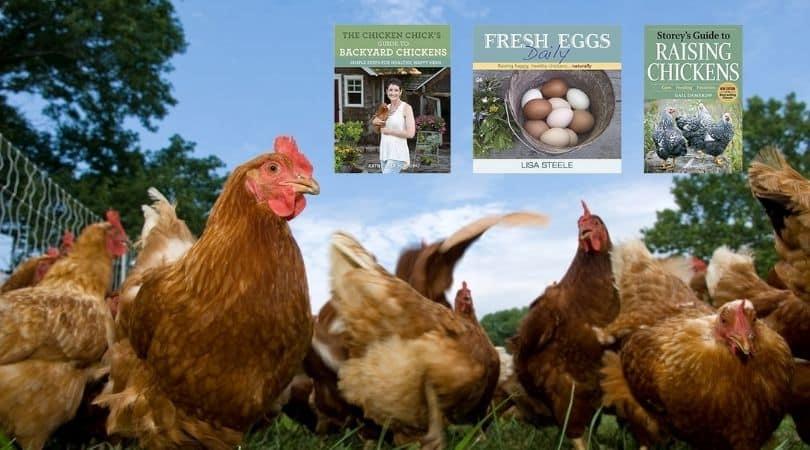 Best-Raising-Chickens-Book